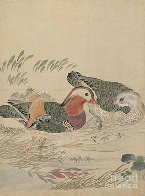 Bald Painting - Birds Of Japan In The 19th Century by Celestial Images