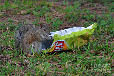Photograph - 14- Chip Lovin' Squirrel by Joseph Keane