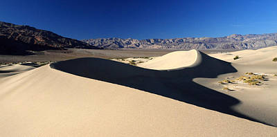 Bear Photography - Mesquite Sand dunes in Death Valley National park by Pierre Leclerc Photography