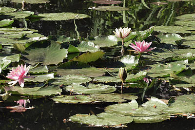 Photograph - Monet's Water Lilies by Harvey Barrison