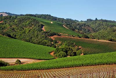Pastoral Vineyard Photograph - Napa Valley Vineyard by Mountain Dreams