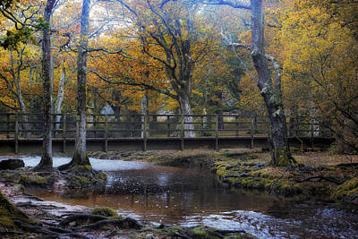 Baeume Photograph - New Forest - England by Joana Kruse