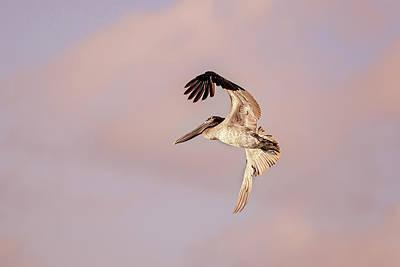 Grace Kelly - Pelican by Peter Lakomy