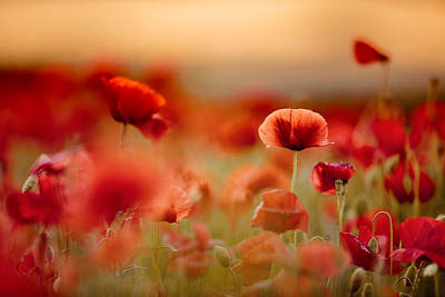 Field. Cloud Photograph - Poppy Dream by Nailia Schwarz