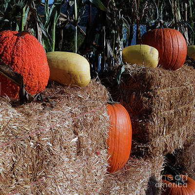 Photograph - Pumpkins by Jesse Watrous