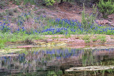 Photograph - Texas Bluebonnets 8 by Victor Culpepper