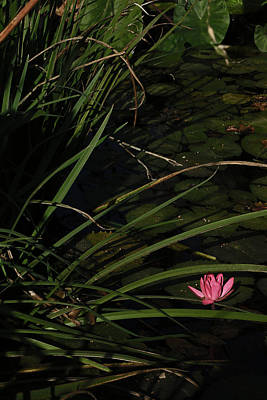Photograph - Water Lilly by Ronald Olivier