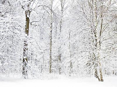 Photograph - Winter Forest by Irina Afonskaya