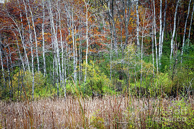 Photograph - 1408 Autumn's Pallette by Steve Sturgill