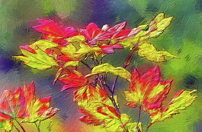 Digital Art - Vine Maple Color by Bill Johnson