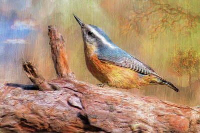 Digital Art - Red Breasted Nuthatch by Bill Johnson