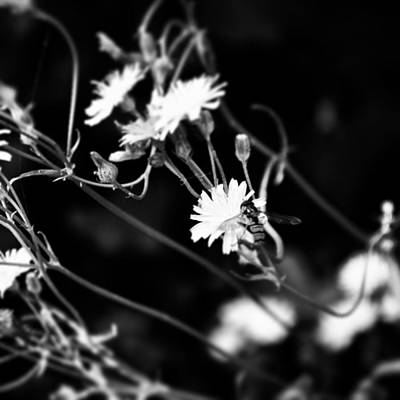 Botanical Photograph - Instagram Photo by Jason Michael Roust