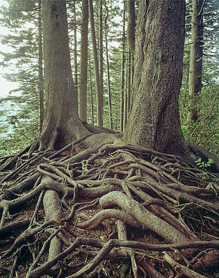 Photograph - 145920 Tree Roots Gsmnp by Ed Cooper Photography