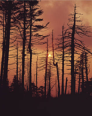 Photograph - 146217 Sunset Through Ghost Forest by Ed Cooper Photography