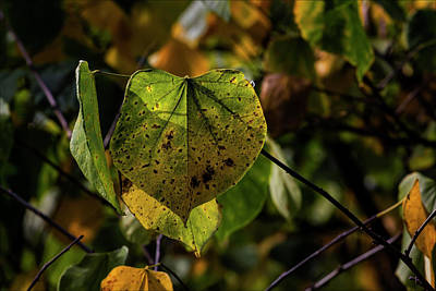 Photograph - Autumn Leaves by Robert Ullmann