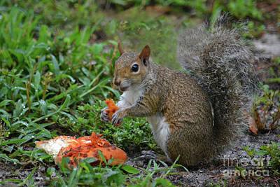 Photograph - 15- Pizza Lovin' Squirrel by Joseph Keane