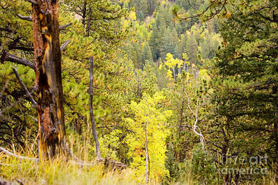 Steven Krull Royalty-Free and Rights-Managed Images - Rocky Mountain Autumn by Steven Krull