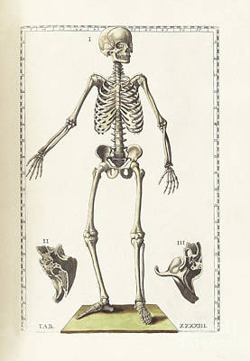 The Science Of Human Anatomy Art Print by National Library of Medicine