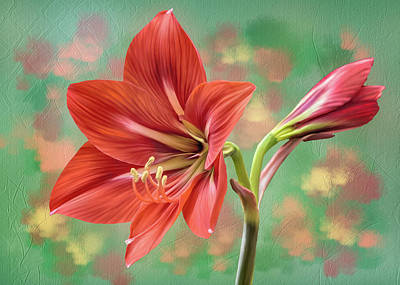 Digital Art - Amaryllis #1 by Bill Johnson