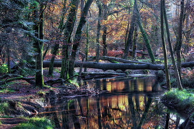 Wald Photograph - New Forest - England by Joana Kruse