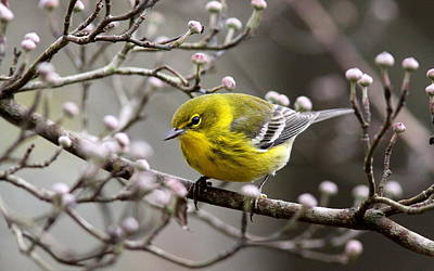 Abstract Airplane Art Rights Managed Images - 1579-002 - Pine Warbler Royalty-Free Image by Travis Truelove