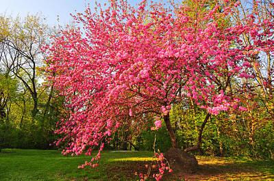 Flower Digital Art - Blossom by Super Lovely