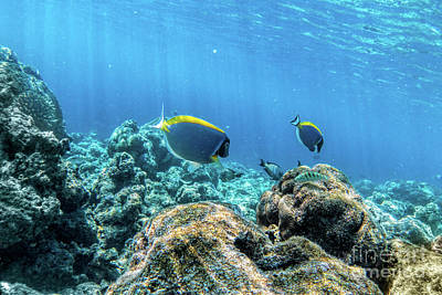 Natural Photograph - Underwater Coral Reef And Fish In Indian Ocean, Maldives. by Michal Bednarek
