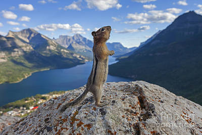 Photograph - Ground Squirrel, Canadian Rockies by Arterra Picture Library
