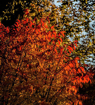 Photograph - Fall Foliage by Robert Ullmann