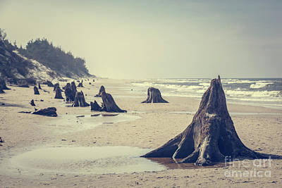 Photograph - 3000 Years Old Tree Trunks On The Beach After Storm. Slowinski National Park, Baltic Sea, Poland by Michal Bednarek