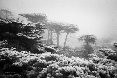 Photograph - 17 Mile Drive Cyprus Tress  by Craig J Satterlee