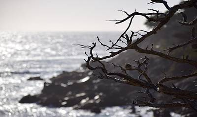 Photograph - 17 Mile Drive  by Sandy Taylor