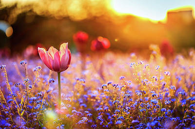 Bright Digital Art - Tulip by Super Lovely