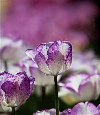 Edward Hopper - Tulips by Robert Ullmann