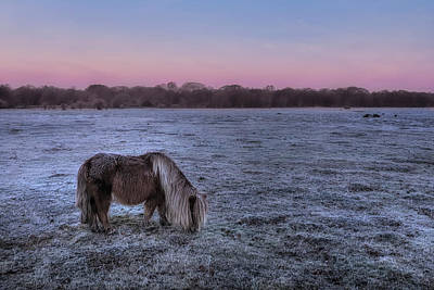 Shetland Ponies Photograph - New Forest - England by Joana Kruse