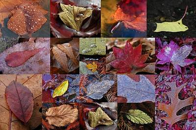 Photograph - 18 Examples Of Beautiful And Inspiring Tree Leaf Photography by Juergen Roth