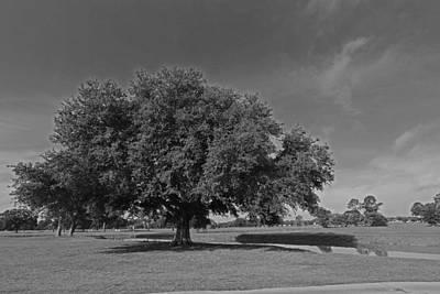 Photograph - Louisiana Live Oak Tree by Ronald Olivier