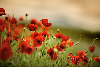 Crowds Photograph - Summer Poppy Meadow by Nailia Schwarz
