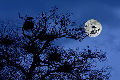Photograph - Heronry At Night by Arterra Picture Library