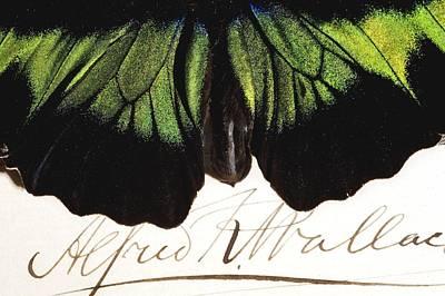 1855 Wallace And Rajah Brooke's Birdwing Art Print