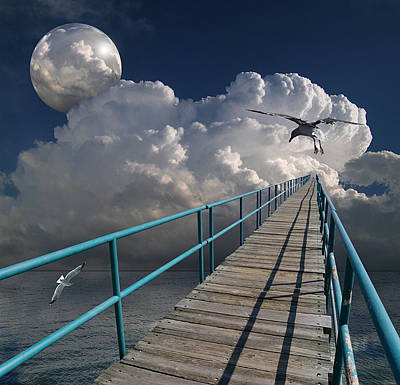 Sea Bird Wall Art - Photograph - 1875 by Peter Holme III