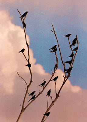 Photograph - 19 Blackbirds by Steve Karol
