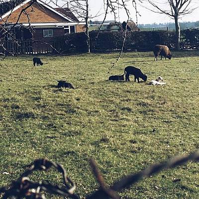 Warwickshire Photograph - 19. First Sights Of Spring #lambs #baby by Emma Gillett