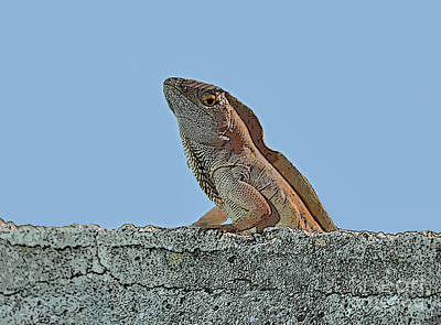 Photograph - 19- Lizard by Joseph Keane