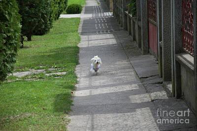 Photograph - My Small Dog by Elvira Ladocki