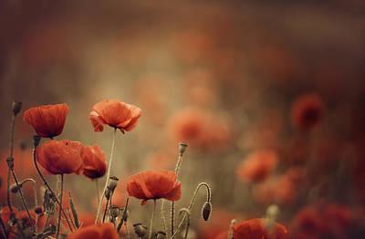 Meadows Photograph - Poppy Meadow by Nailia Schwarz