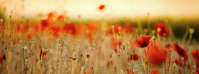 Artistic Photograph - Summer Poppy Meadow by Nailia Schwarz
