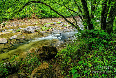 Art Print featuring the photograph Williams River Summer by Thomas R Fletcher