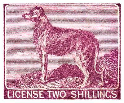 Breeds Digital Art - 1904 Ireland Dog License Revenue Stamp by Retro Graphics
