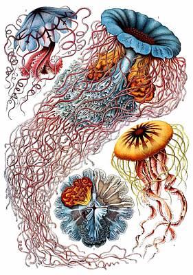 Haeckel Digital Art - 1904 Jellyfish Art Forms Of Nature Print by Retro Graphics